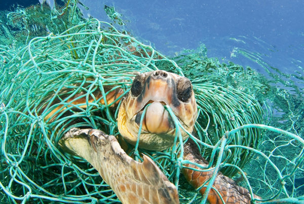 Why Turtles Avoid Nigeria's Shorelines